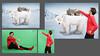 polar bear 3luik