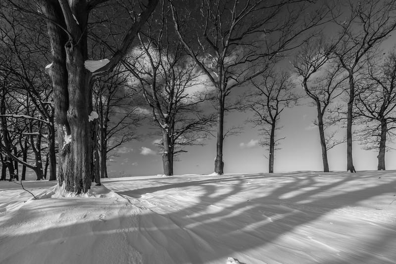 Winter scenes-3.jpg