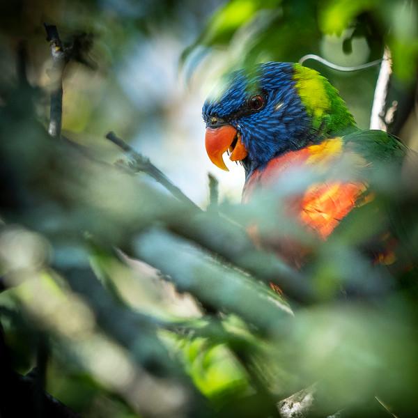 030319 bird .JPG