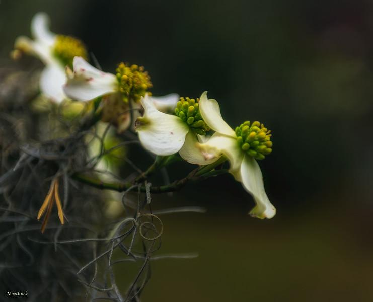 3flowers_DSC3017.jpg