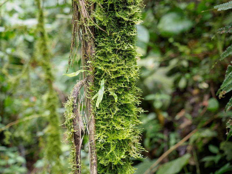 Bellavista cloud forest
