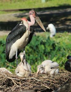 20140504_Busch_Gardens_Photo_Safari
