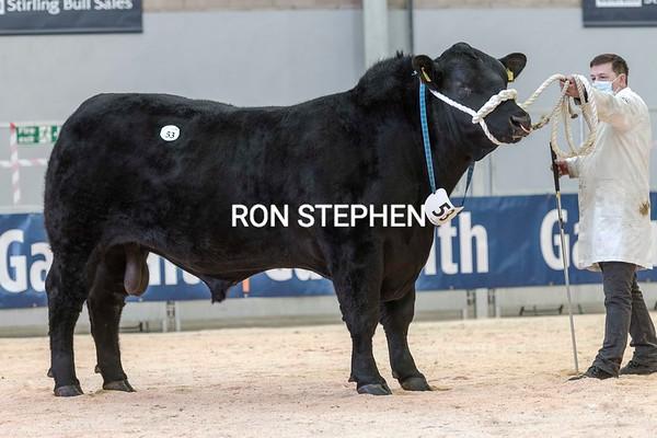 Stirling Bulls 2021