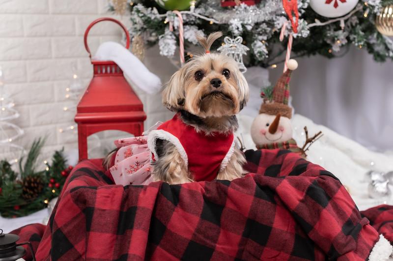 12.10.19 - Leide e Mel's (Mel Pet) Studio Christmas 2019 - -41.jpg