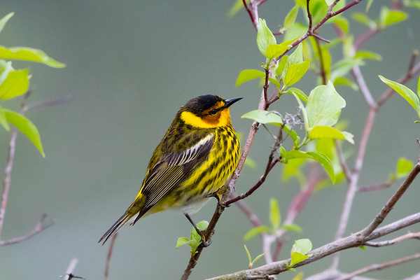 2019 Warblers, Waterfalls and Wildflowers Tour