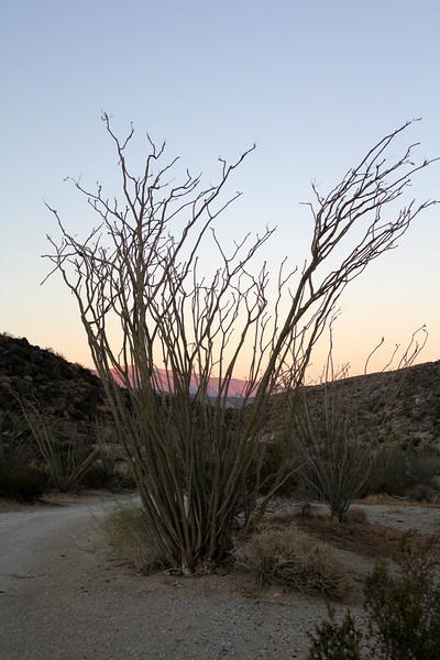 05 Cougar Canyon (202).JPG