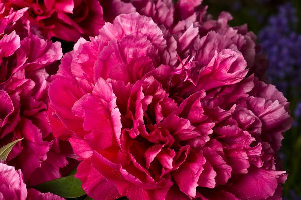 Helen's flowers - 2010