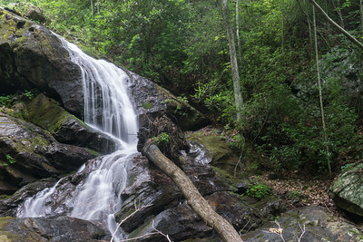 Chinquapin Branch @ 2200 Feet