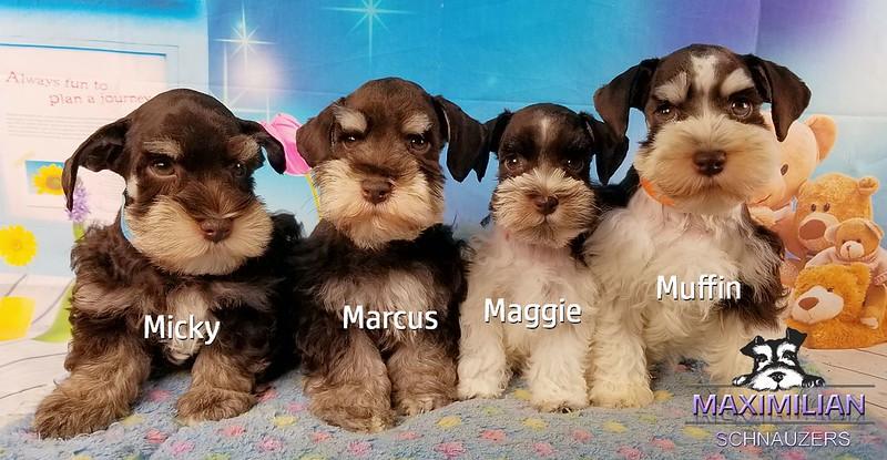 Minnie Pups 035.jpg