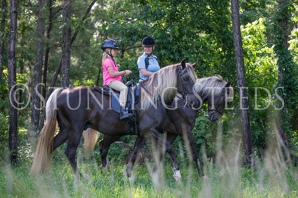 Trail riding with Rocky Mountain Horses