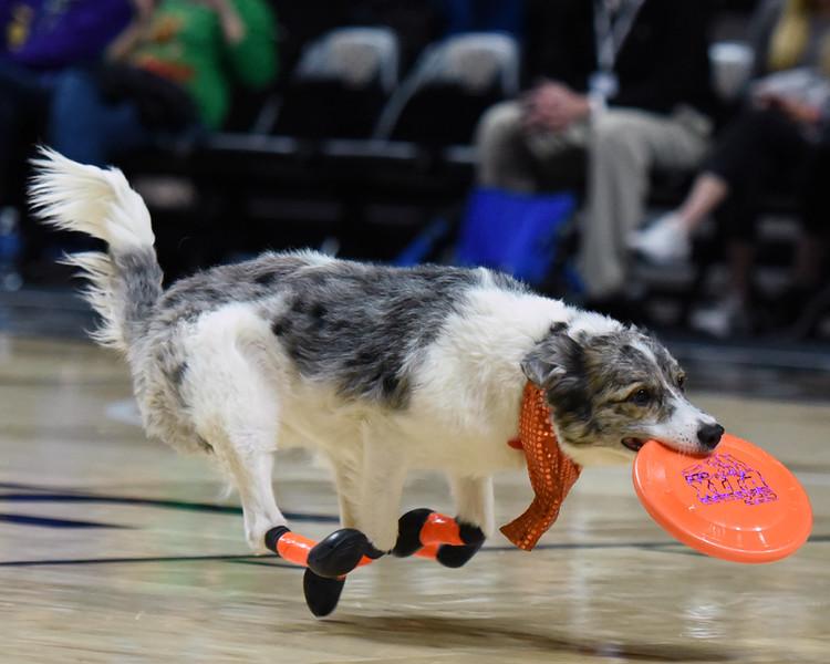 Frisbee dogs 2016-40.jpg