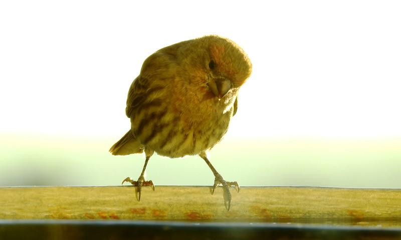birds (114).JPG