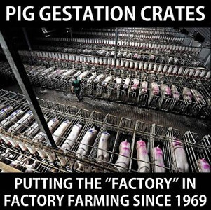 Gestation-crates.jpg