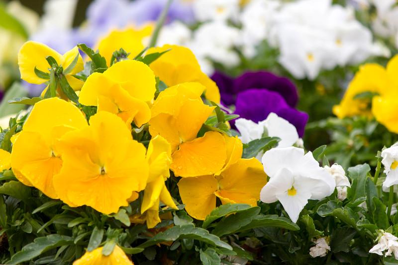 2016_04_14_BYU_Spring_Scenery_6615.jpg
