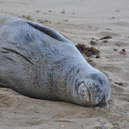 2012 Rocky the Monk Seal Visit  10-2012