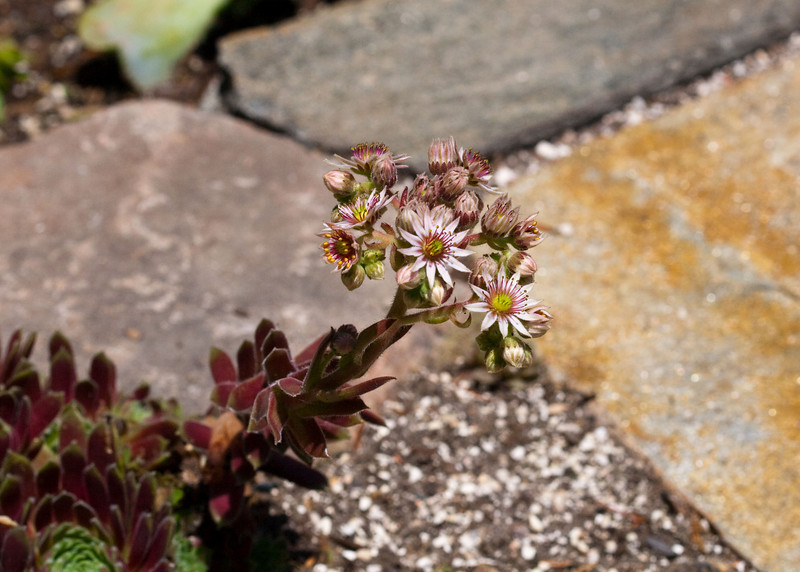 2009 06 30_NY Botanical Gardens_0776_edited-1.jpg