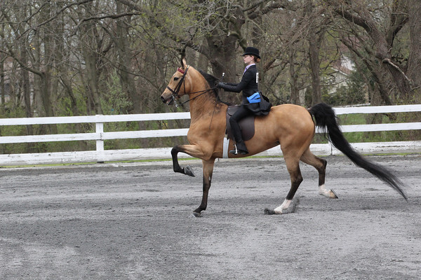 033 Open Walk-Trot Pleasure 12 & Under