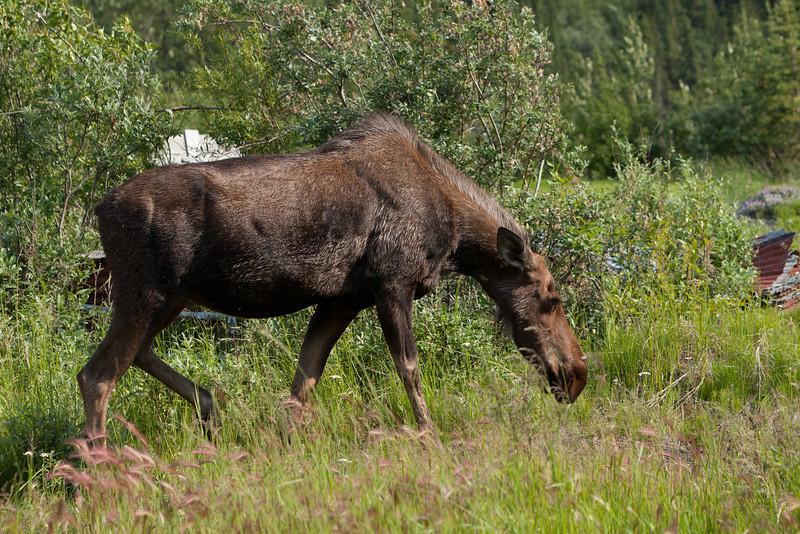 Alaska Copper River-8256.jpg