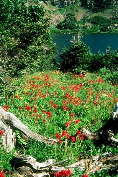 amh FLOWERS (1209).jpg