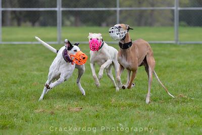 2016 Greyhounds In Gettysburg