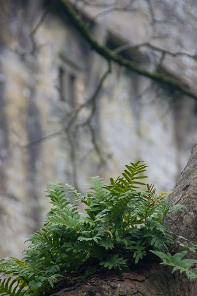 blarney-castle-31.jpg