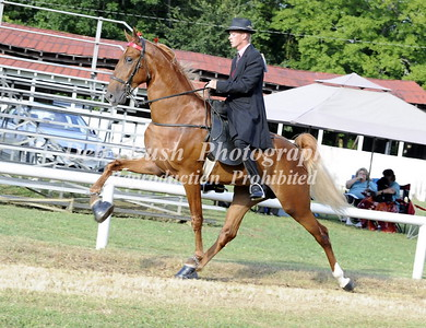 CLASS 3 TWO YR OLD WALKING OPEN RC