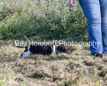 EPEC Earth Dog Trial