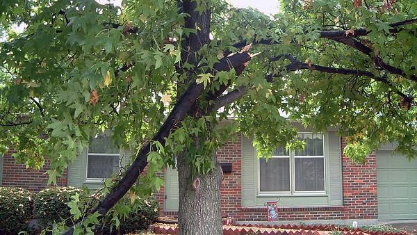 August 29, 2003:  I've got a branch down .  .  .