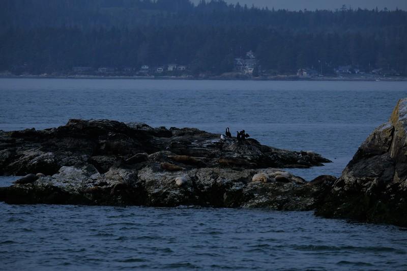 Sleeping Seals.JPG