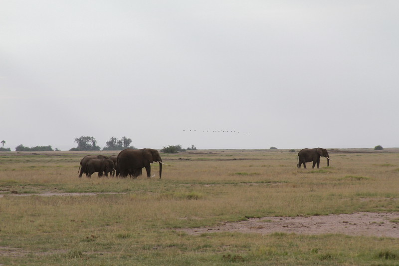 Kenya 2019 #2 308.JPG