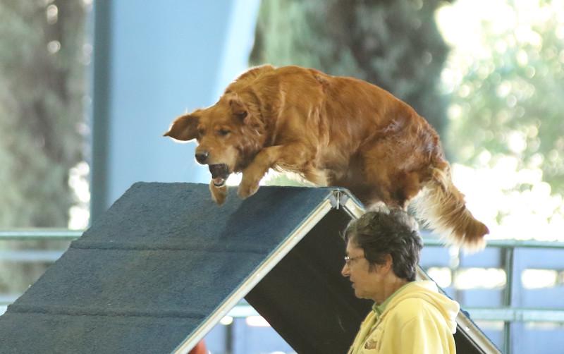 10-31-2015 Border Terrier-2402.jpg