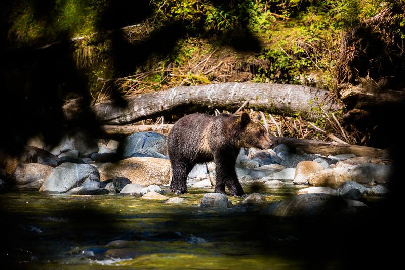 150910_GrizzlyForest_4380.jpg