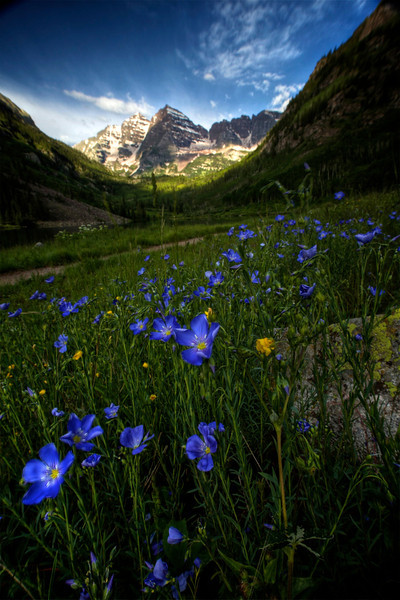 HDR blue flowers at Bells tonemapped