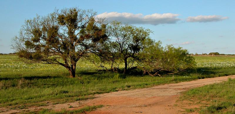 Tree and drive.jpg