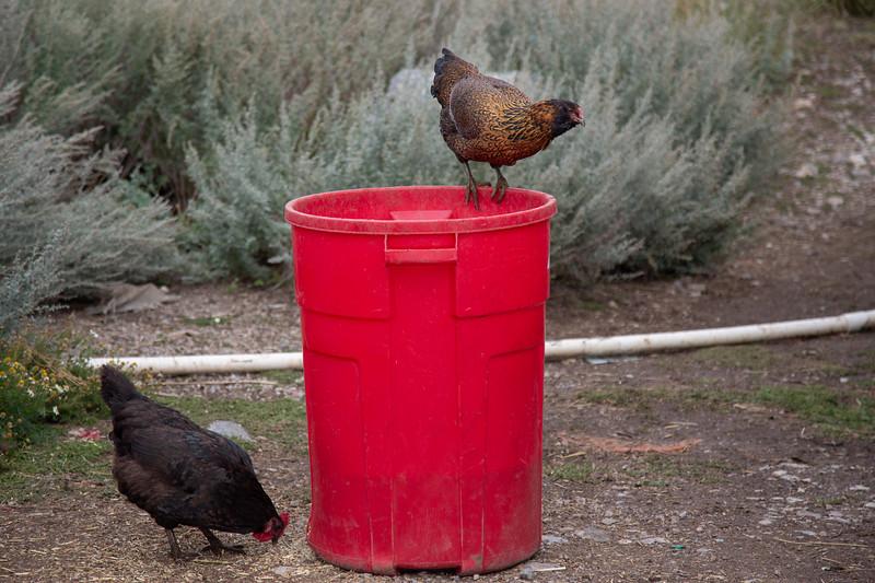 chick (1 of 1)-2.jpg