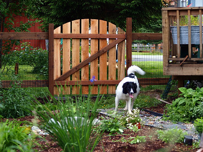 The fence is dog ready