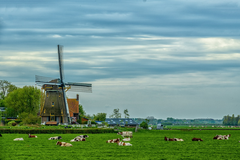 HOLLAND - WINDMILLS-0293.jpg