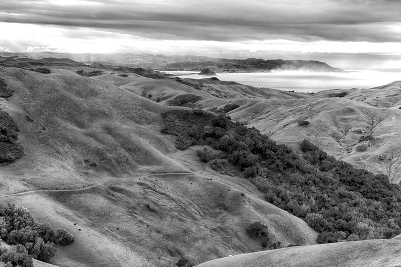 Central Coast Hillside