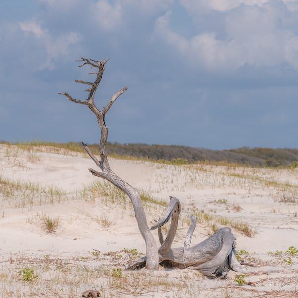 Jekyll Island-0945.jpg
