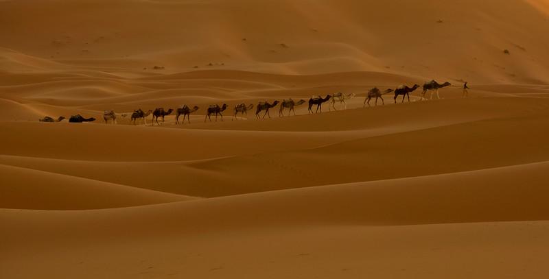 אורחת גמלים בשקיעה.jpg