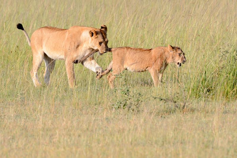 20160215__KET7925_Serengeti_Day_7.jpg