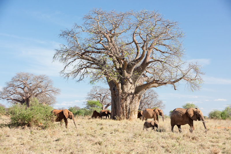 Africa - 102016 - 7905.jpg