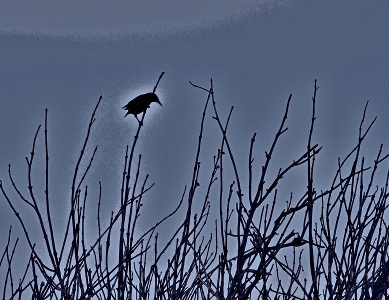 Starling 3