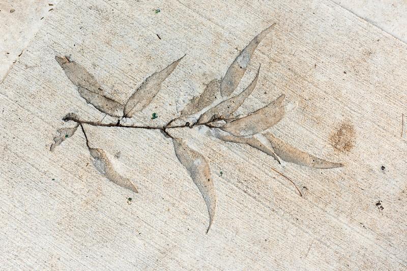 Leaves in Cement-11.jpg