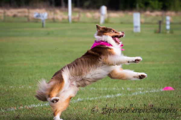 _MG_2506Up_dog_International_2016_StephaniellenPhotography.jpg