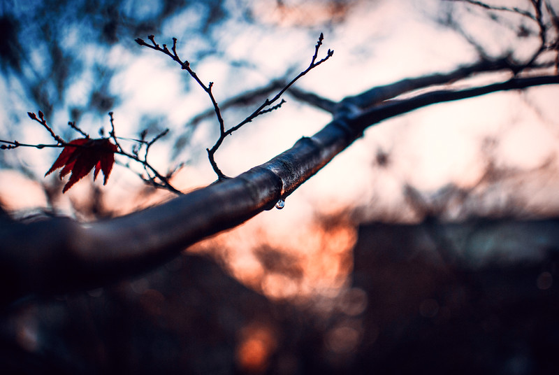 autumn tree branch dawn.jpg