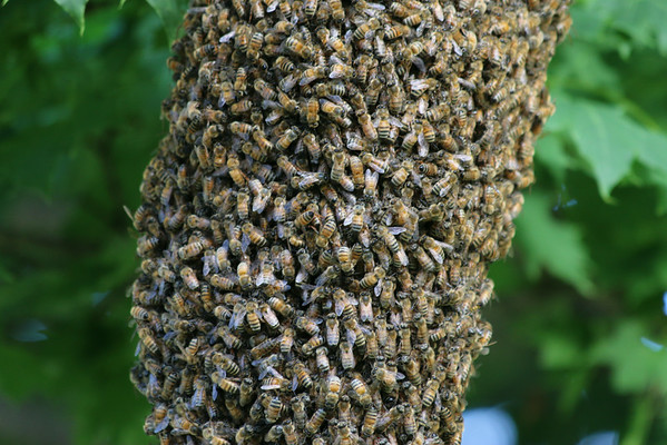 bees in fond du lac