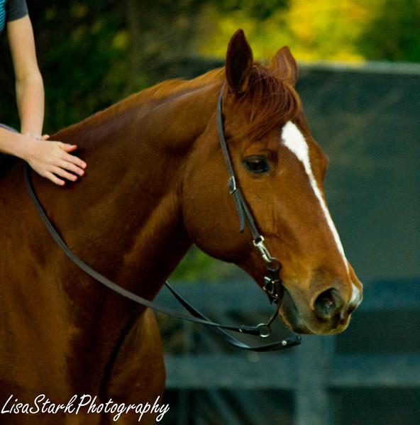 Equestrian Reserve-18.jpg