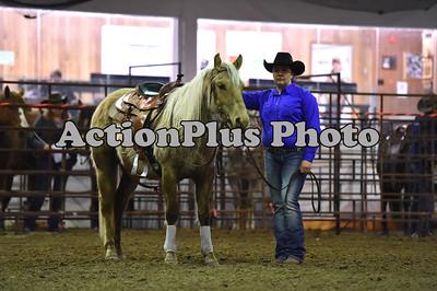 2017 Pierson Ranch Horse
