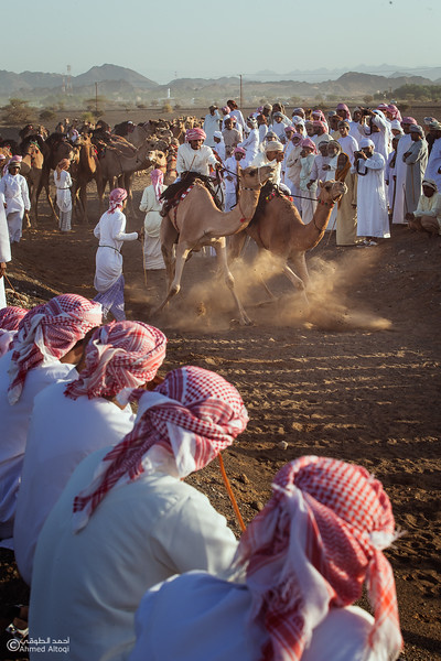 IMGL8890A-1- Camel Race.jpg